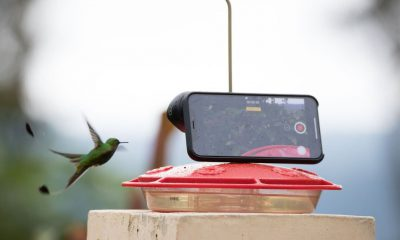 Le slow-motion de l'iPhone est puissant : la preuve avec une étonnante vidéo de colibri en plein vol 31