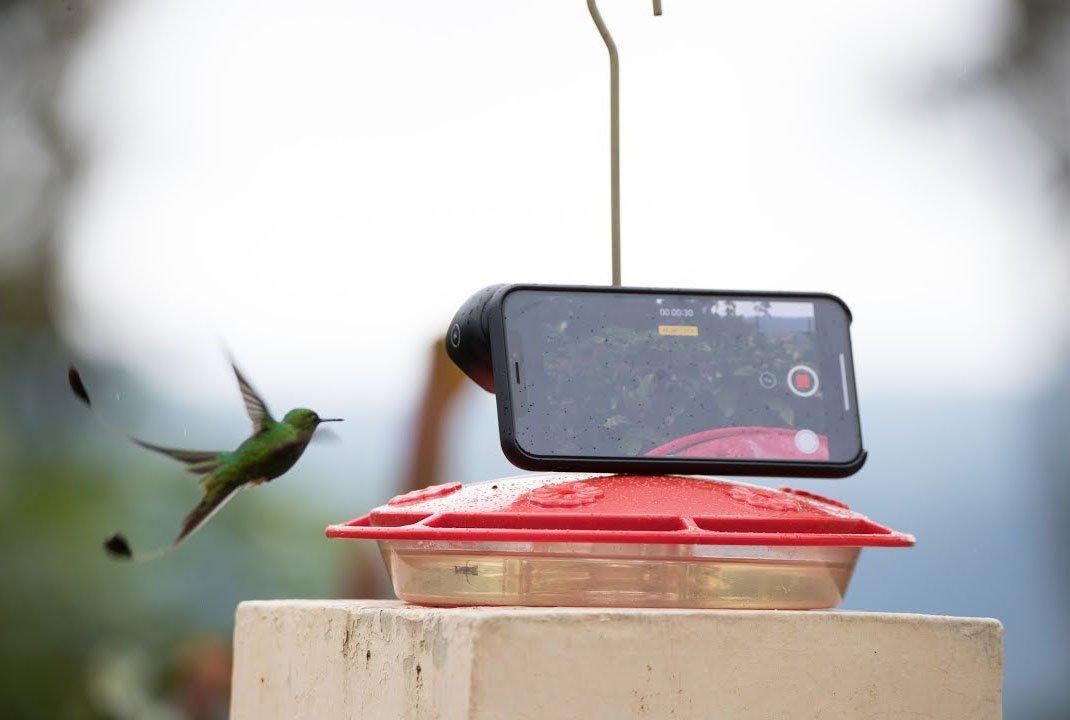 Le slow-motion de l'iPhone est puissant : la preuve avec une étonnante vidéo de colibri en plein vol 1