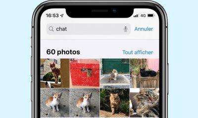 Avec iOS 13, la détection des chats et chiens débarque dans les apps 13