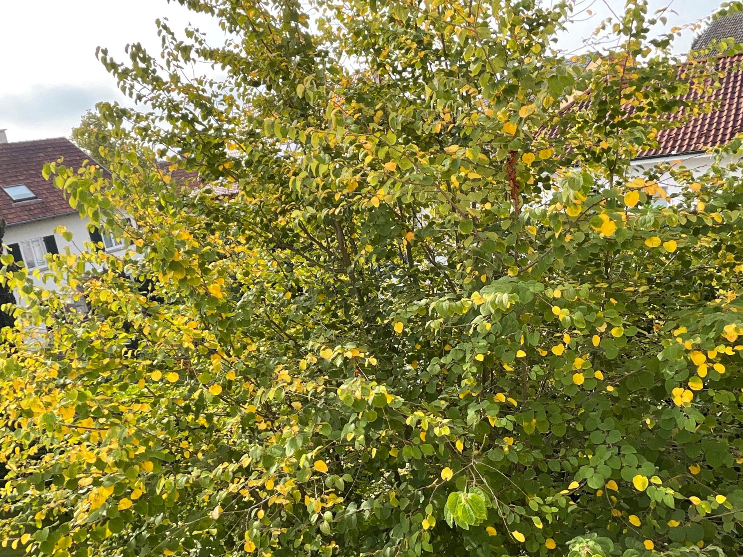 iPad mini 6 caméra avant photo arbre