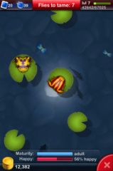 Pocket_Frogs_02.jpg