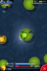 Pocket_Frogs_08.jpg
